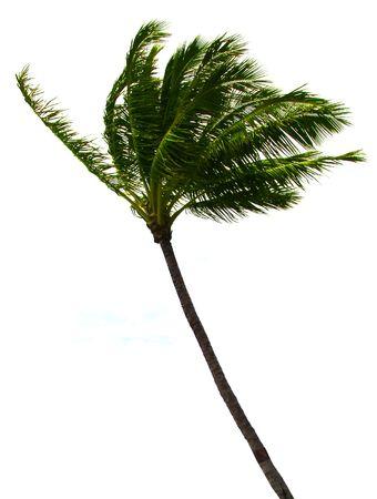 Cutout of Palm tree Stock Photo