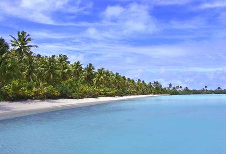palmtrees: Tropical Coastline