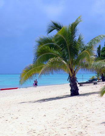 Palm Tree on Beach in Aitutaki
