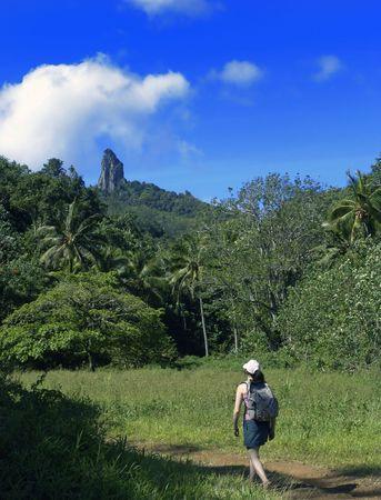 Walking through tropical bush Stock Photo