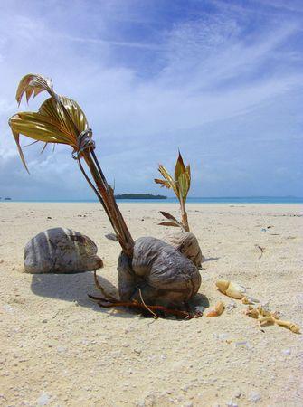bask:  Palm