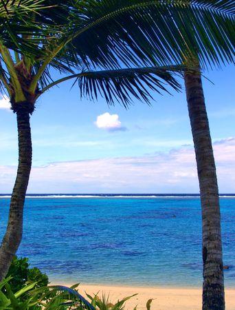 2 Palms overlooking lagoon Stock Photo