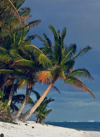 moorea: Palm Beach