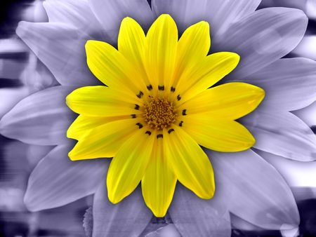 Yellow Purple Flower Banque d'images