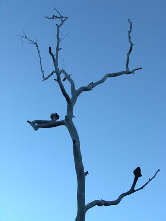 barren: Barren Tree Silhouette