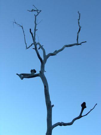 nieużytki: Niepłodna Drzewo Silhouette