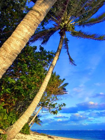 Classic Palm Stock Photo - 220663
