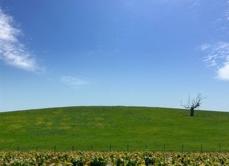 barren: Barren Tree in Green Field Stock Photo
