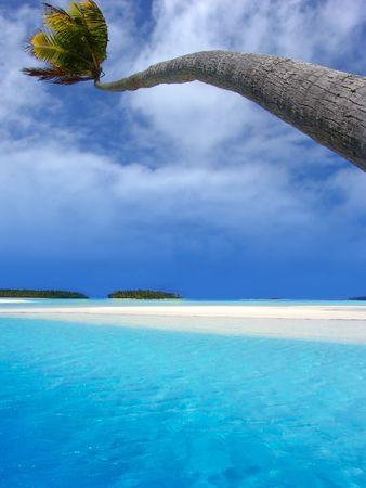 bending over: Palm bending over lagoon