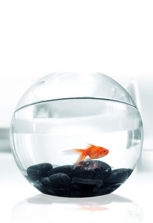 confined: Goldfish in Bowl Stock Photo