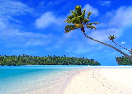 Palm Tree on One Foot Island photo