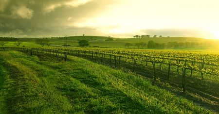 rainclouds: Sunrise over the Vineyard in the Barossa