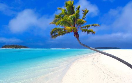 bask: Bending Palm in the Cook Islands
