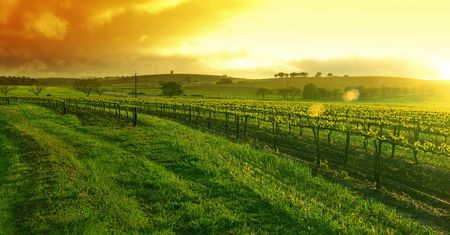 Sunrise over the Vineyard in the Barossa photo