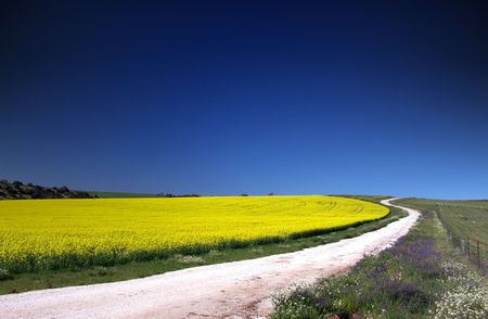 canola: Path through Canola Field