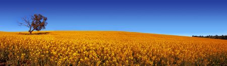 barossa: Rural Field in South Australia