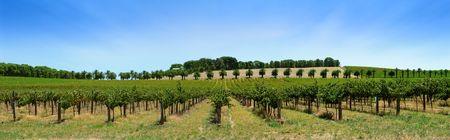 barossa: Winery in the Barossa Valley Stock Photo