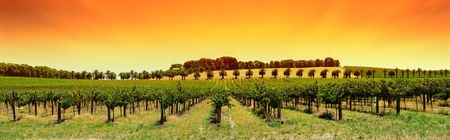 winery: Winery in the Barossa Valley Stock Photo