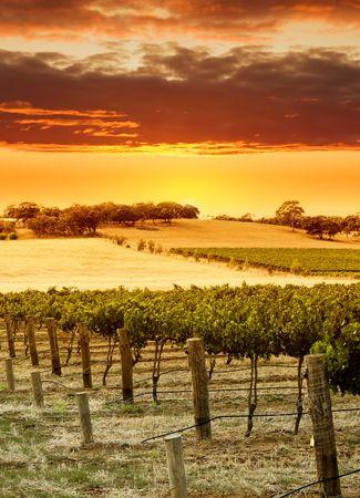 Vineyard Sunset in the Barossa Valley Stock Photo
