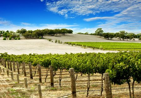barossa: Lusg Green Vineyard in the Barossa Valley Stock Photo