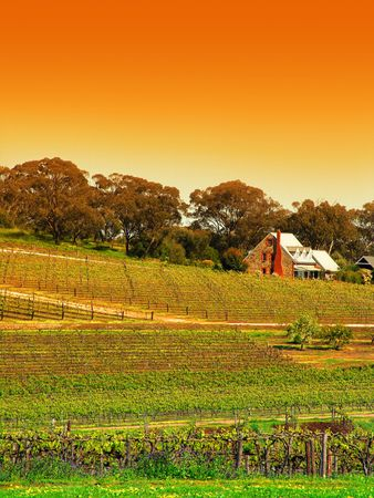 Vineyard in the Barossa Valley Stock Photo - 1093007