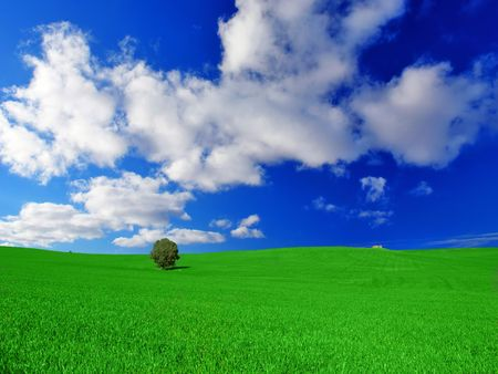 australia farm: Green Meadow with Single Tree Stock Photo