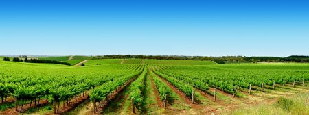 australia farm: Colourful Vineyard in One Tree Hill, South Australia