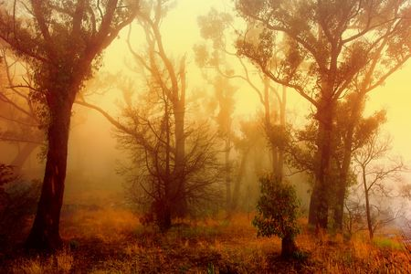Sunrise on a foggy morning in the Grampians Forest Stock Photo - 2677048