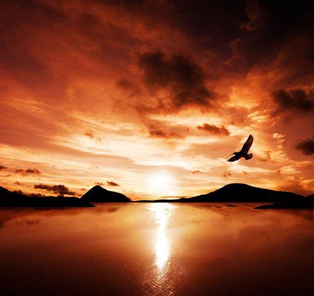 aguila volando: Un mar ave vuela hacia el impresionante puesta de sol