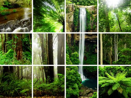 ferns: Rainforest Images