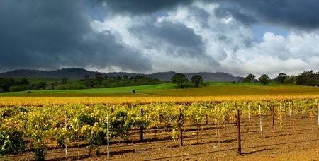 barossa: Dark clouds over colourful vineyard