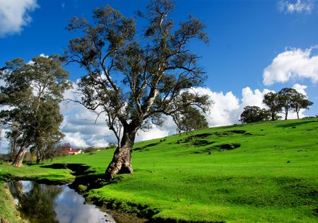 australia farm: A rural South Australian landscape Stock Photo