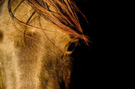 Closeup of a horse with copy space Stock Photo