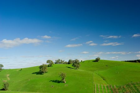 Gorgeous Field in the Adelaide Hills Stock Photo - 3421526