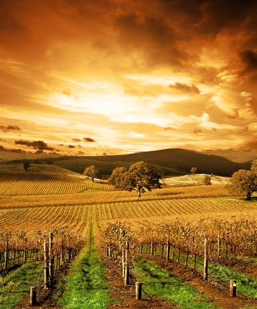 Autumn Sunset over vineyard photo