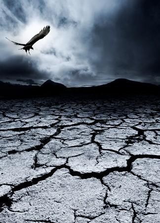 A bird flies over a desolate landscape photo