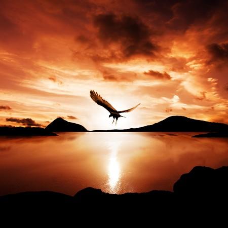 aguila volando: Un mar de aves fuera de las moscas en la incre�ble puesta de sol Foto de archivo
