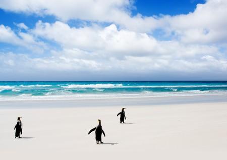 falkland: Volunteer Point, Falkland Islands