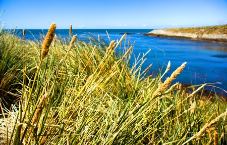 falkland: Tussock Grass and Coastline in the Falkland Islands Stock Photo