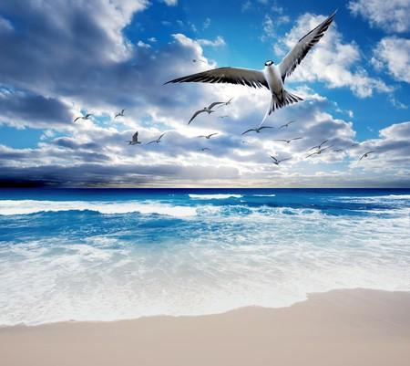 over the sea: Sea Birds flying over a gorgeous ocean scene