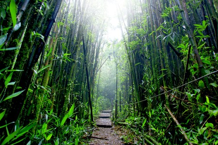 ascension: Bamboo Forest on Green Mountain, Ascension Island Stock Photo