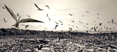ascension: Hundreds of Birds flying around on Ascension Island Stock Photo