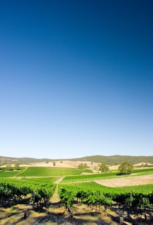 adelaide: Vineyard in Adelaide Hills, South Australia Stock Photo