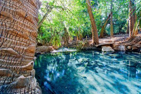 resortes: Mataranka Springs en el norte de Australia