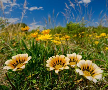 Wild Flowers growing in Tasmania