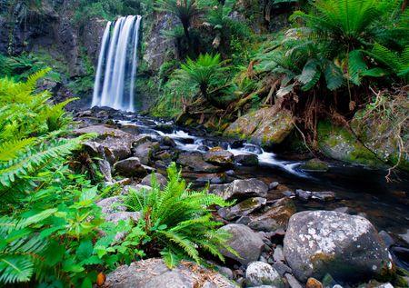 helechos: Hermosa cascada en Victoria, Australia
