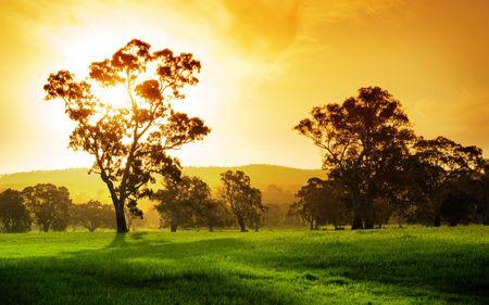 australie landschap: Fantastische plattelands veld in Zuid-Australië Stockfoto