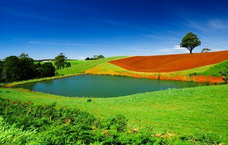 Rural field in Tasmania, Australia Stock Photo