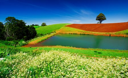 Rural field in Tasmania, Australia Stock Photo