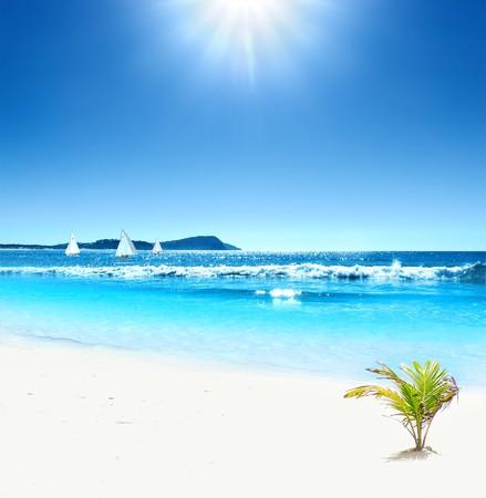 베이비 팜이있는 멋진 열대 해변 스톡 콘텐츠